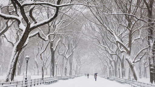 Snow Covered Trees, Central Park, New York.jpg
