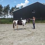 Workshop Natural Horsemanship