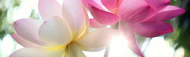 click the pretty lotus & SUBSCRIBE BY EMAIL
