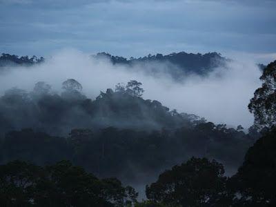 Sunrise over the rainforest in Ulu Temburong National Park in Brunei on Borneo