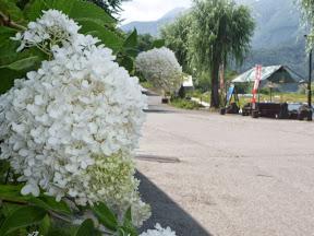 勝山村営駐車場にある花