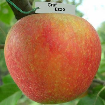 Граф Эззо яблоня купить