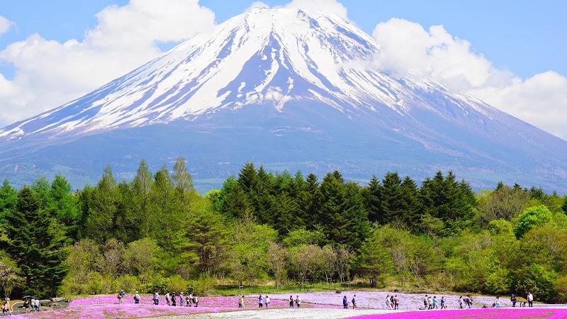 富士芝桜まつり 写真6