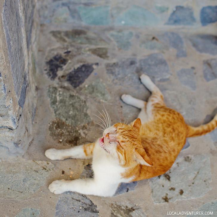Resident Greek Cat - Best Beaches in Mykonos.