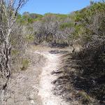 Kangarutha Track north of White Rock (103909)