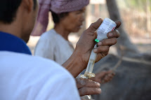 Vaccination of animals in Cambodia