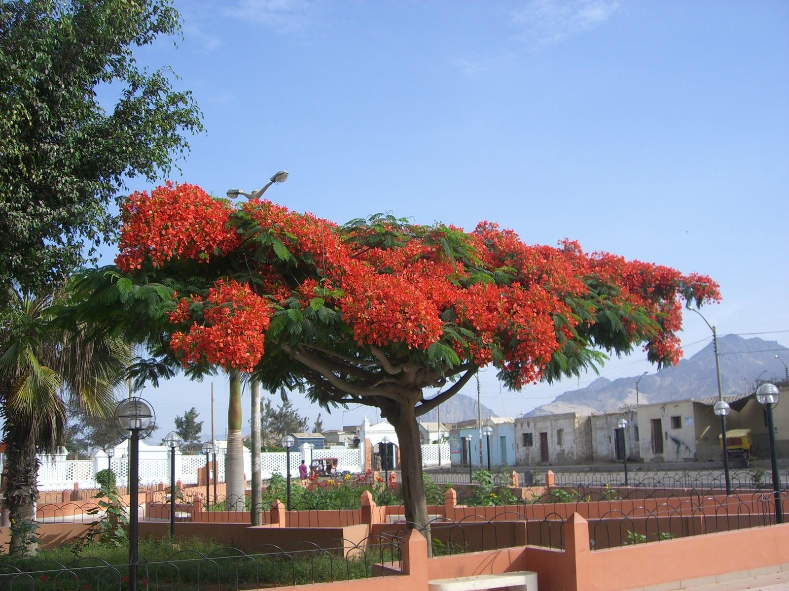Haikus frente al espejo fuego en las ramas for Arbol del fuego jardin