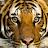 Binh VT avatar image