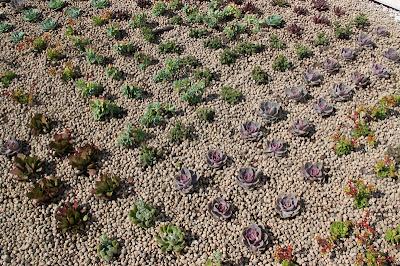 Cubierta vegetal realizada con sistema Baobab.