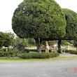 29  tvarované stromy, sochy, bonsaje.JPG