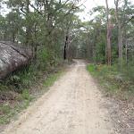 Toomeys Rd Trail (228223)