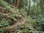 Canyon Trail