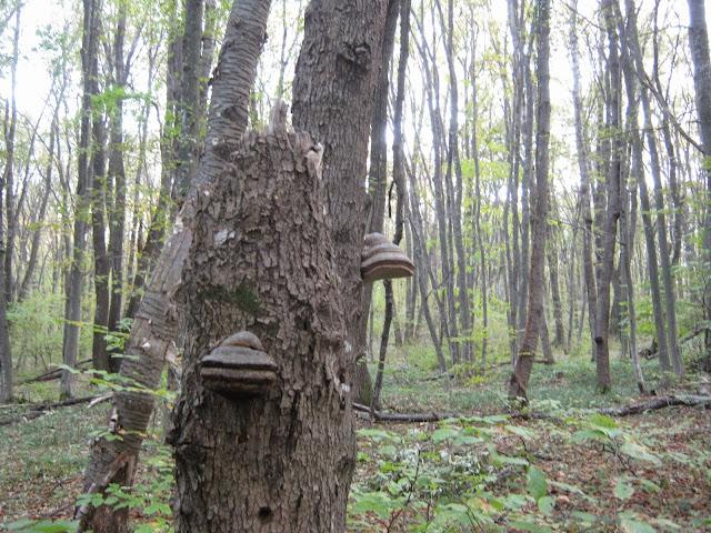 breza%2520119.jpg