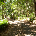 Trail through forest in the Blackbutt Reserve (399982)