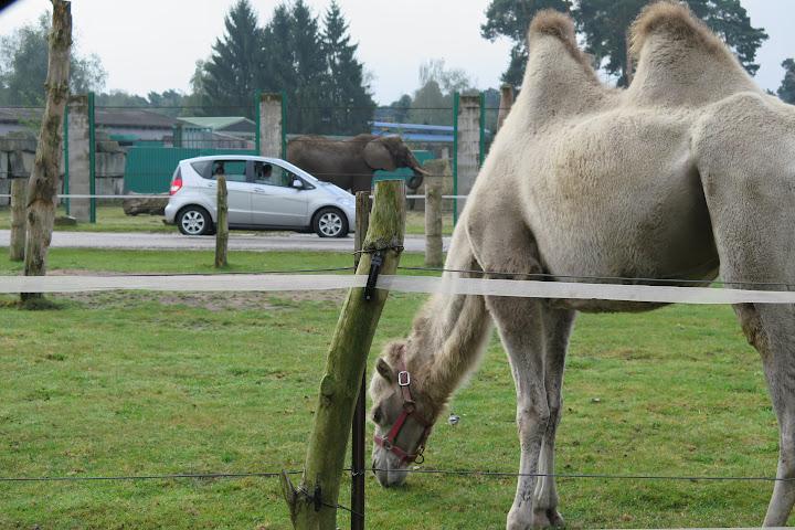Elefanten und Kamele sind nochmals durch Zäune abgetrennt