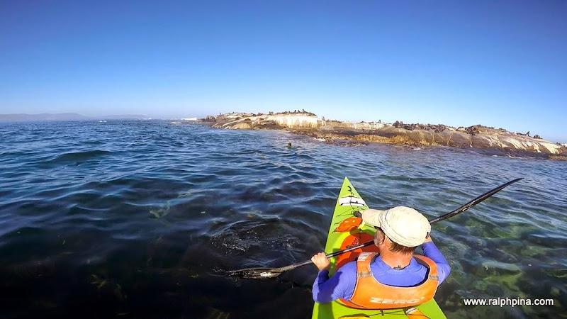 Duiker Island seal colony