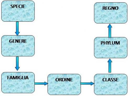 SCHEMA-CLASSIF