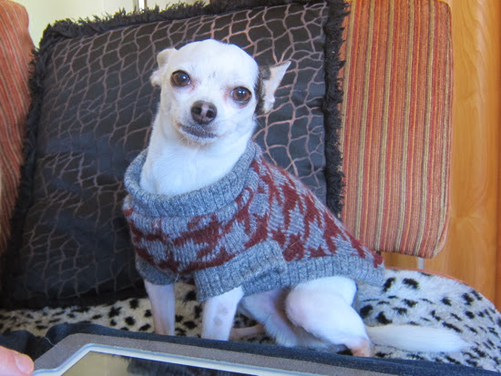 Dog's houndstooth sweaters made with wool knit fabric from Mood Fabrics