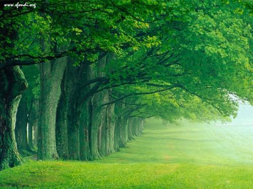 Parco nel verde della foschia mattutina