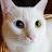 Pasha Z avatar image