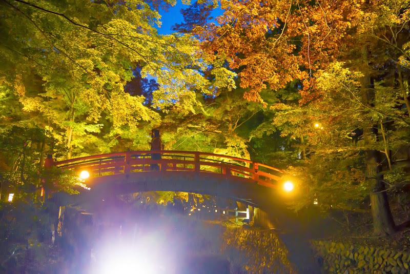 京都 紅葉 北野天満宮 ライトアップ 写真2