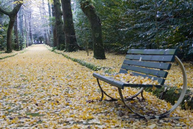 Las hojas caducas sobre el musgo del camino