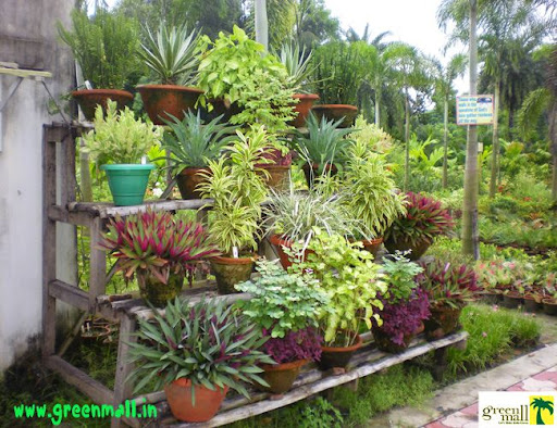 Where to buy plants in kolkata green mall dress your for Indian home garden design
