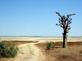 Tree on the road in Palmarin Senegal