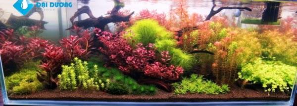 hồ thủy sinh theo phong cách hà lan 2
