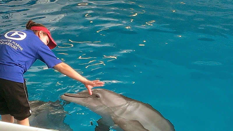 IMAG6348 A Dolphin Tale 2 Experience at Clearwater Marine Aquarium: #WinterHasHope