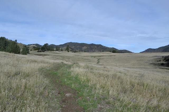 wide grassy meadow