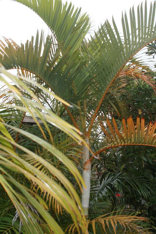 Futur jardin d'orchidées!!! IMG_3574