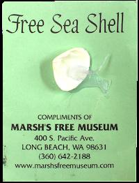 Free Seashell