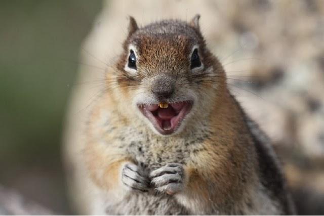 The 6th Opinion : Rabid Squirrel~