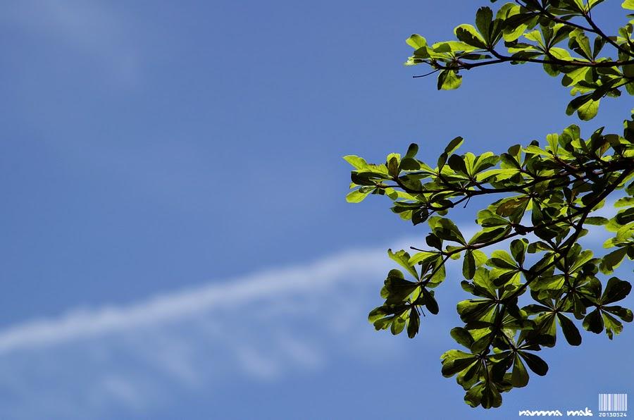 葉子與藍天