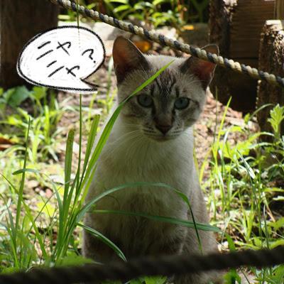 Katze in japanischem Garten