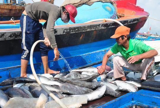 Nhiều ngư dân tỉnh Quảng Ngãi sau khi đánh bắt ở những vùng biển xa trở về không bán được cá vì giá quá rẻ. Ảnh: T.Trực
