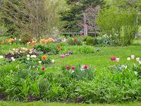 Springtime Black Walnut Gardens 1