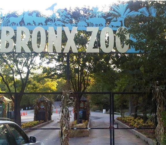 Lelaki parah diserang harimau di Zoo Bronx
