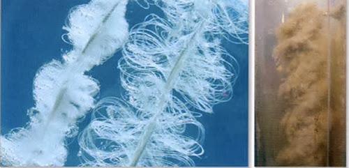Biocord antes y después de usarse