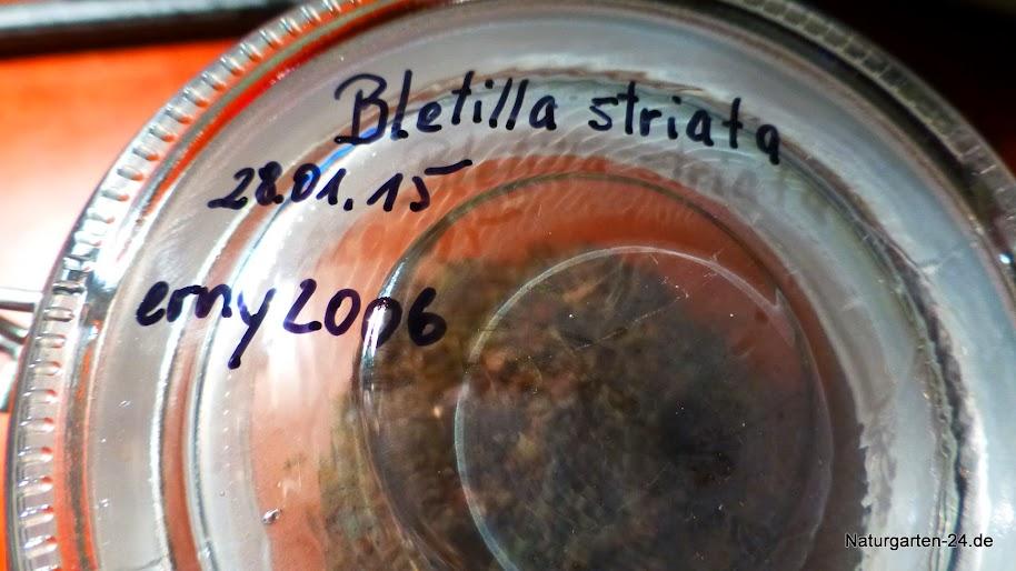 symbiotischer Aussaatversuch von Dactylorhiza fuchsii P1080235