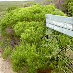 Sign post on Curra Moors Track (34454)