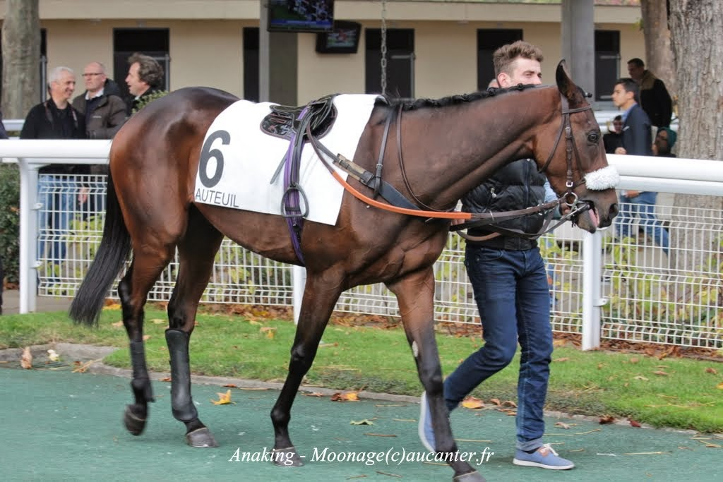 Photos Auteuil 2-11-2014 (48h de l'obstacle) IMG_5417
