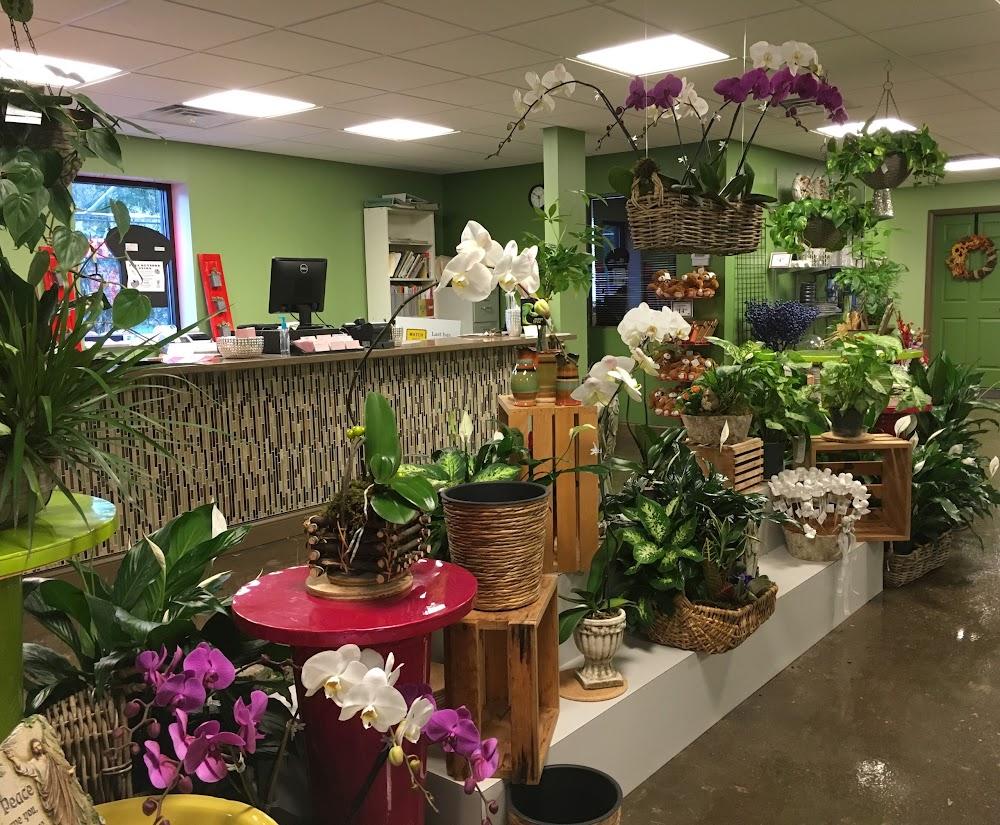 Планта-а магазин цветов, магазин