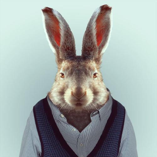 *Zoo Portraits動物時尚秀:正經八百時裝篇! 9