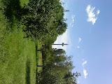 Fernsehturm höher als Bäume