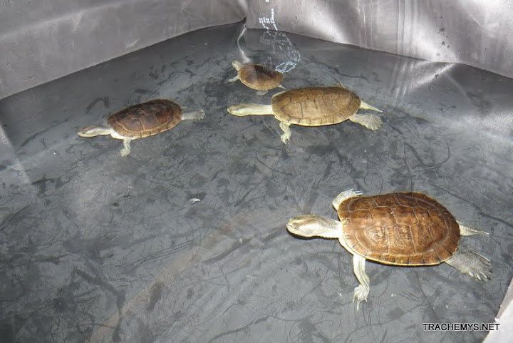 mes tortues (BK) - Page 6 IMG_0257