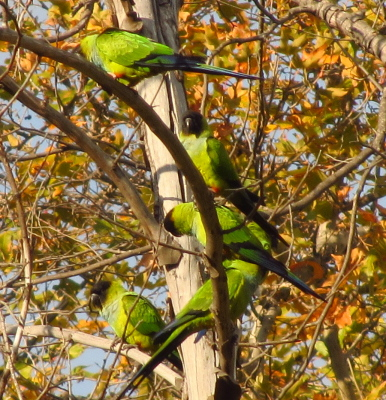 5 parrots in a tree