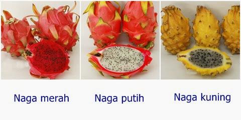 3 jenis pitaya