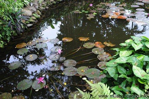 Bán đất nền biệt thự vườn phước an nhơn trạch đồng nai rất đẹp giá rẻ 1tr5/ m2